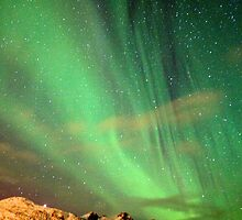 Northern Lights by Sandra Farrow