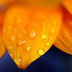 Flower-1 by DougOlsen