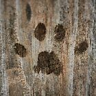Purrfect Paw Print by Rachel Leigh