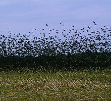flocking by helveticaneue