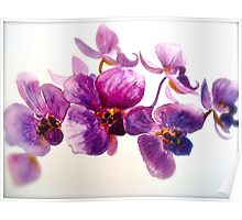 Orchidee... Poster