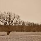 Tree landscape in sepia by mltrue