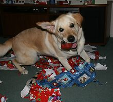 Christmas Chews, 3 years old. by elphonline