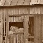 Hay bales in a barn by mltrue