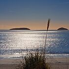 Abersoch bay with grasses by Turtle  Photography