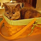 Molly's Basket by hickerson