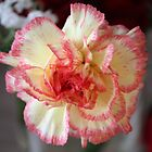 Pretty Carnation by squonk1666