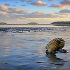 Shell on the beach by Turtle  Photography