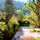 Sintra, welcome to paradise 249..sintra portugal.. by Almeida Coval