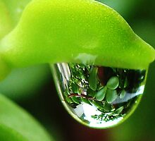 Water droplet by amar singh