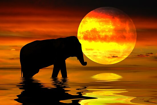 Africa Moon