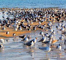 Birds, Birds and More Birds by Rosalie Scanlon