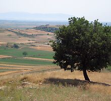 Albanian Countryside by Nichelle Jones