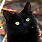 Black Cat :  by AnnDixon
