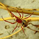 Spider  by bobby1