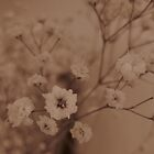 baby's breath by millymuso