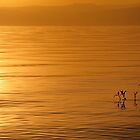 Sunset on the Sea of Galilee by Noam Gordon