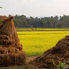 Rice stacks and mustard fields by Breanna Stewart