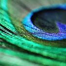 Peacock Feather - Abstract Macro Photograph by ameliakayphotog