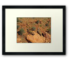 The Spinifex Pigeons sunning themselves. N.Territory. Framed Print