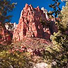 Zion National Park by Wanda Dumas