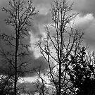 Through The Trees  by heatherfriedman