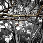 tea cups in a tree by tonilucas