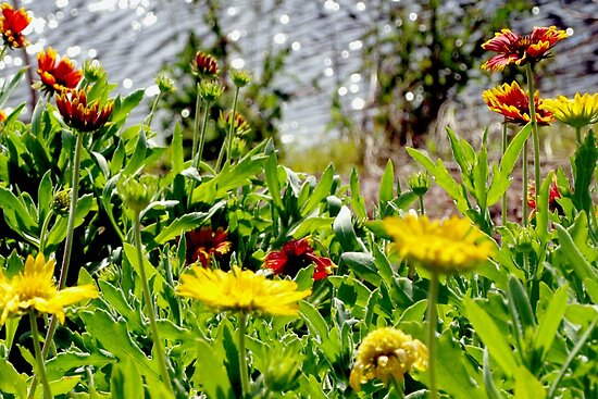 Wildflowers by the water by ♥⊱ B. Randi Bailey