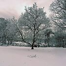 FIRST SNOW by KENDALL EUTEMEY