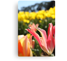 Pink lily tulips and yellow tulips   Canvas Print