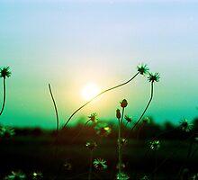 Evening Flowers by Ken McColl