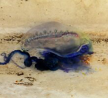 Blue Bottle in Botany Bay on the Back of the Boat by Tina Wright
