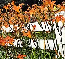 Tigers on a Fence  by John  Kapusta