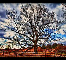 Solo Tree by Brian  Seidenfrau