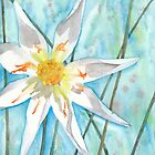 White Dahlia by Ken Powers