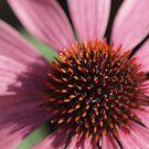 pink flower macro by weglet