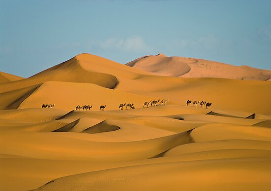 Camel line in the Sahara by Ian Fegent