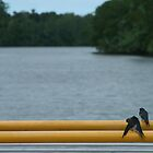 Birds on a Railing by Kate Harrison