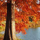 Autumn Cypress at the Lake by Lisa Holmgreen