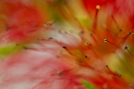 Red Blur by BoB Davis