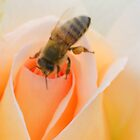After the rain - honey bee 2 by Dona Tantirimudalige