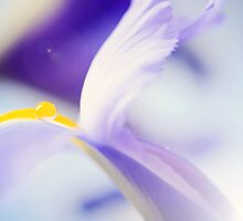Yellow droplet by dhmig