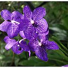 Orchid Garden (2) by Adri  Padmos
