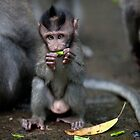 Bali Baby  by Anne Young