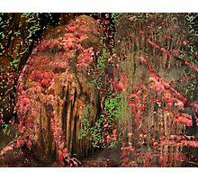 Monkeys Chrysanthemum Cave Photographic Print