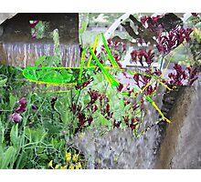 Grasshopper Violet Waterfall Photographic Print