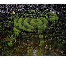 Lamb Hedge Maze Cave Pool Photographic Print