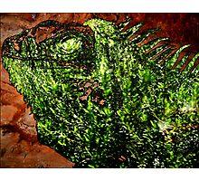 Iguana Fern Cave Photographic Print
