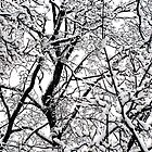 Winter Tangle by Jeannette Sheehy