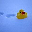 Winter Duck by terrebo